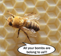 Honeybees trained to sniff bombs