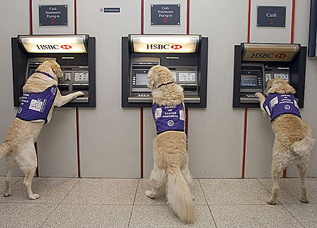 Dogs trained to retrieve money from ATMs