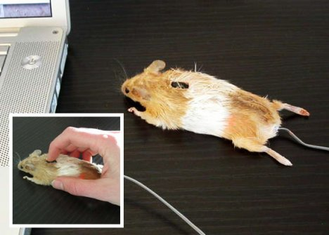 http://www.ubergizmo.com/photos/2009/4/mouse-mouse.jpg